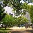 070 聖が自転車に乗る練習をした大淀南公園