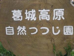 Photo_42